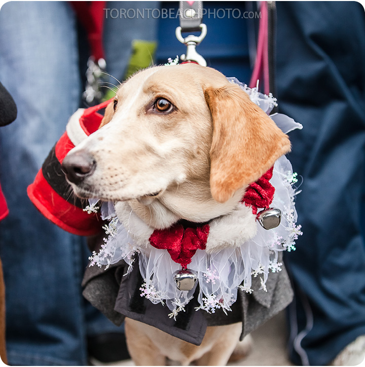 beaches-jingle-bells-Christmas-dog-walk4