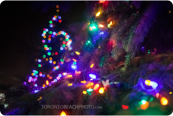 lions-tree-lighting-2012-