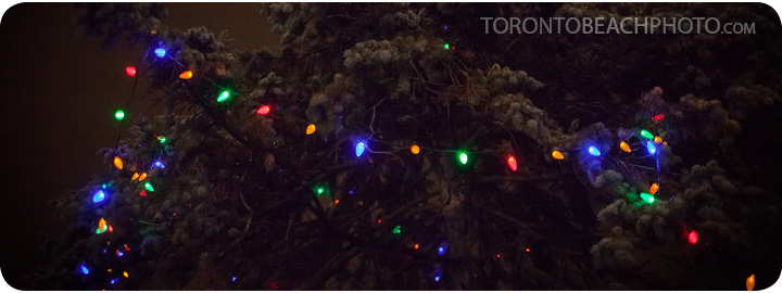 lions-tree-lighting-2012-20