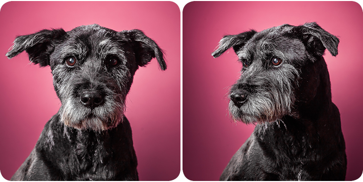 09-dog-photography-studio-pink background