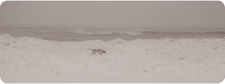 dog on the beach in toronto