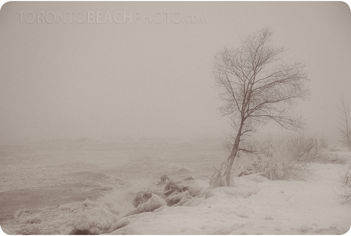 Tree in the beaches in the winter storm