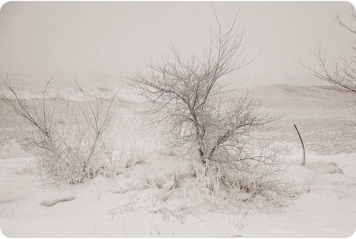 2013-toronto-storm-in-beaches-tree
